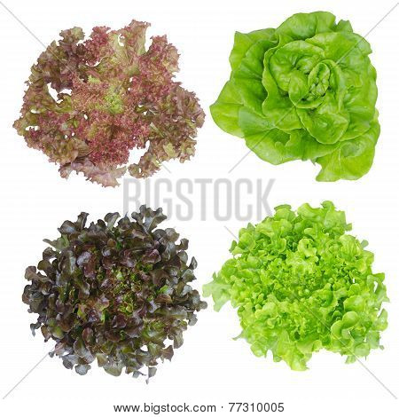 Hydroponics Isolated On White Background