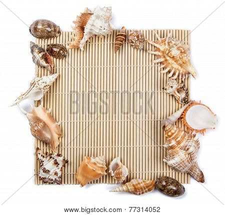 Seashells Frame Of Seashells