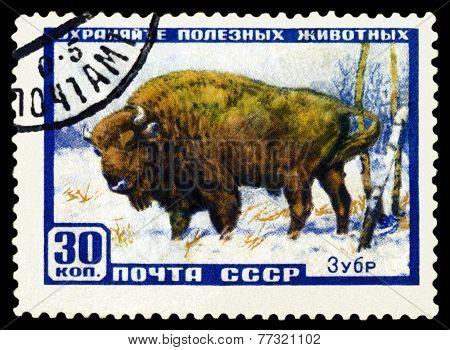 Vintage  Postage Stamp. Aurochs.