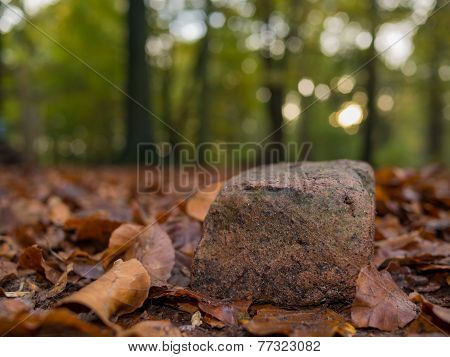 Rock On Fallen Leaves