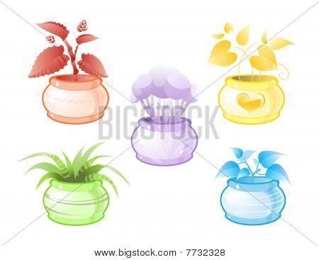 Decorative colored pot plants