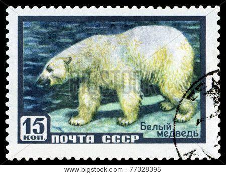 Vintage  Postage Stamp. Polar Bear. Arctic.