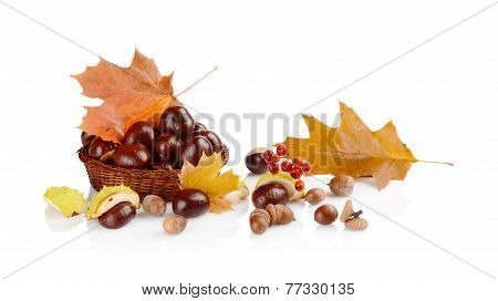 Closeup Basket With Chestnuts And Leaves Isolated On White