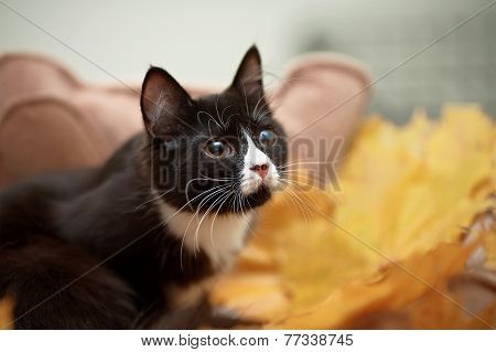 Portrait Of A Black Cat With Autumn Leaves.