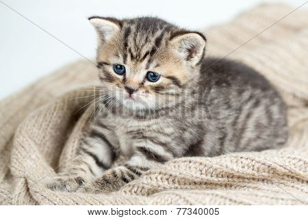 top view of cat kitten lying on jersey