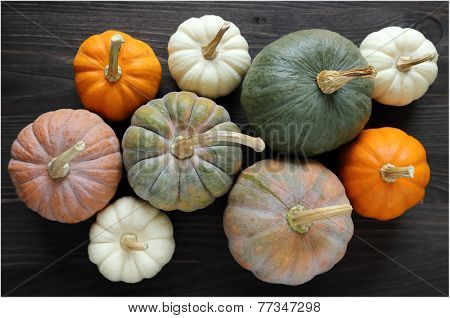 Squash And Pumpkins
