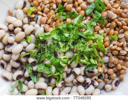 Rocket Salad