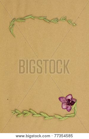 Dry Plants On Beige Paper