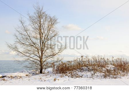 Snowy winter shore of lake Ontario in Sylvan park Toronto