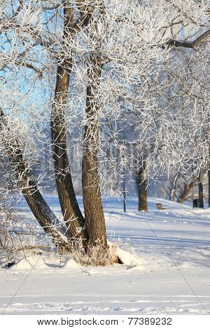Winter landscape with snowy trees