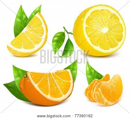 Vector collection of fresh ripe citrus fruits: lemons and oranges with leaves.