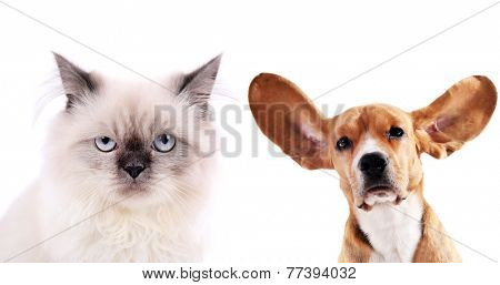 Cat and beagle dog isolated on white