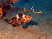 picture of grouper  - The surprising underwater world of the Bali basin - JPG