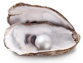 stock photo of pearl-oyster  - Open oyster with pearl isolated on white background - JPG