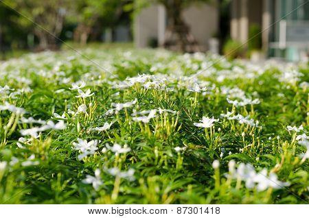 Inda Flower-01