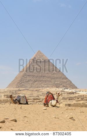 Cairo - Camels and Pyramid at Giza, Egypt