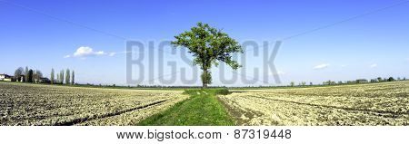 Lonely tree, wide-angle panorama. Color image
