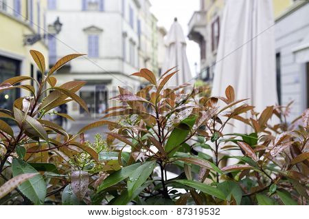 Artificial bush for city decoration. Color image