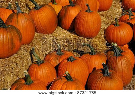 Autumn Harvest: Pumpkins