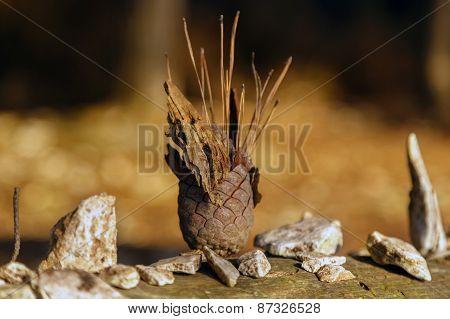 Small natural totem