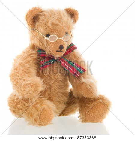 Stuffed intelligent bear with glasses isolated over white background