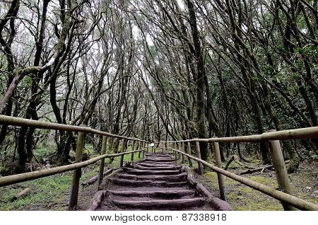 National Park Garajonay