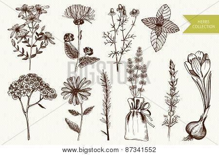 Vintage herbs set