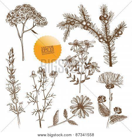 Vintage herbs pattern