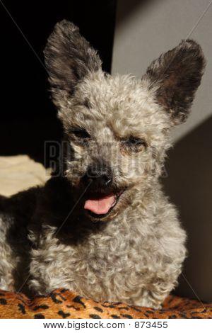 Sunny Puppy