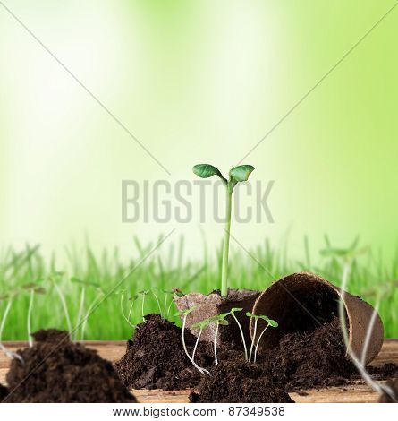 Little plants on wooden table, macro photo.