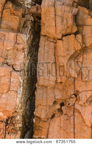 Detail Of A Broken Tree Trunk With Exposed Bark