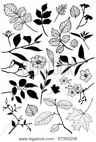 Vector floral elements.