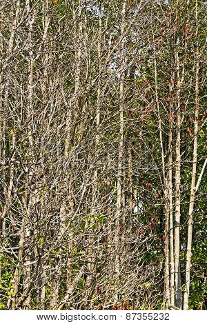 Forest Dry Mangrove Sunshine