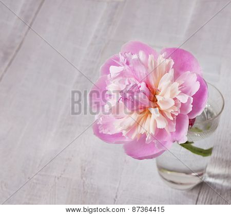 Peony in a glass  on old wooden plank.