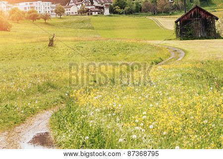 Flower Meadow Near A Foot Path