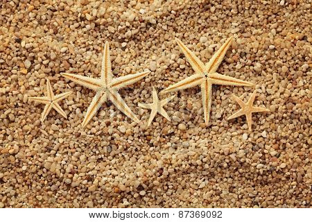 summer background. seashells border on sand