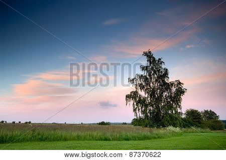 Lonely Tree And A Sunset