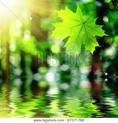 in the forest leaves hanging over the water on the sun backgrounds