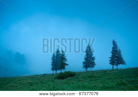 Foggy morning landscape with pine tree highland forest at Carpathian mountains. Travel background