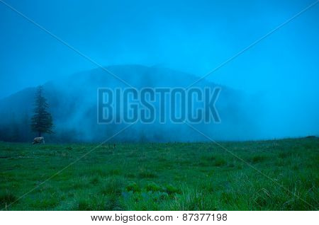 Foggy morning landscape with pine tree highland forest.