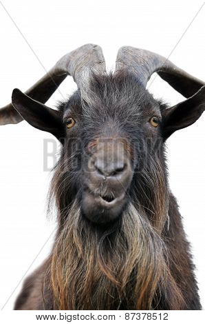 Close-up Portrait Of A Goat