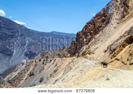 Horse And Rider In Colca Canyon