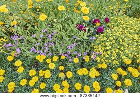 various flowers in the garden