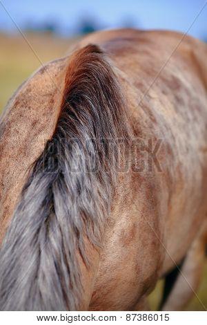 Mane Of The Grazed Horse.