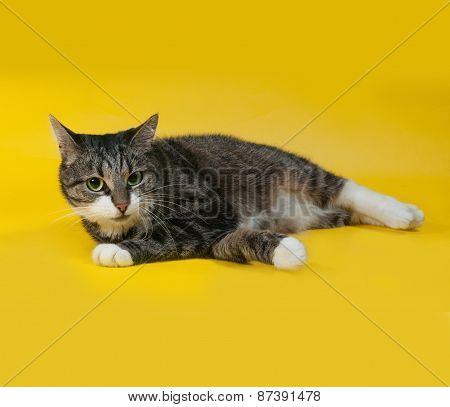 Thick Striped Cat Lies On Yellow
