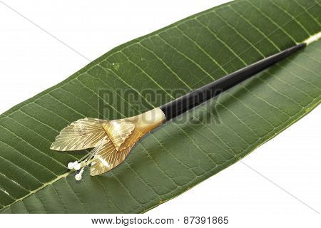 little barette on green palm leaf isolated