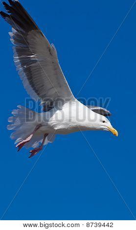Gulls or seagulls