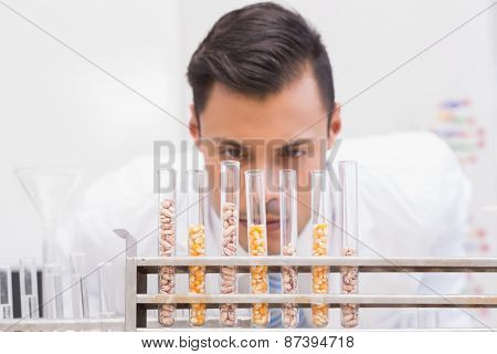 Scientist looking at tubes of corn and kernel in the laboratory