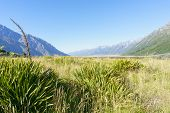 foto of flax plant  - Valley of flax between two converging ranges in Southern Alps - JPG
