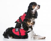 pic of vest  - service dogs  - JPG